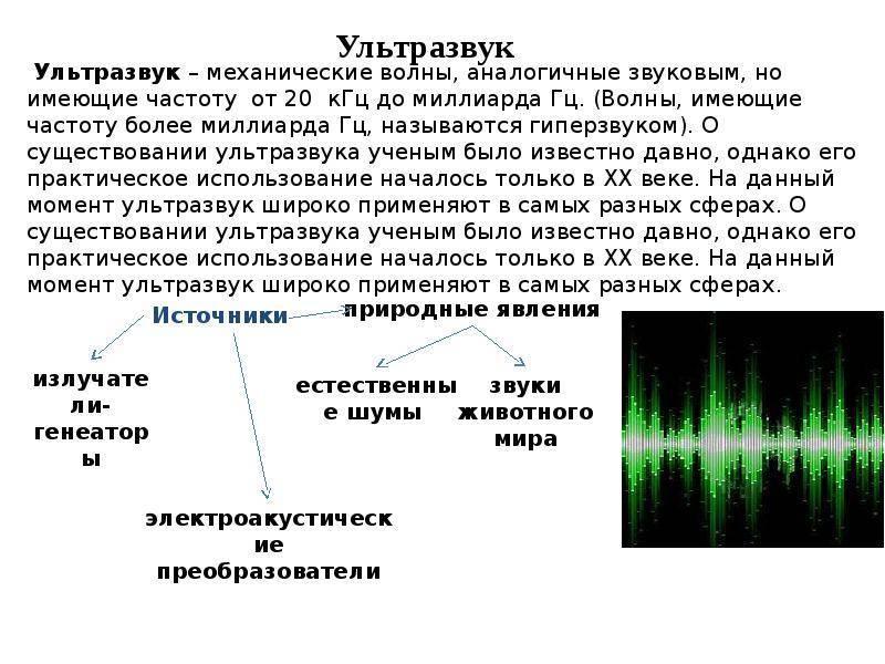 Вреден ли ультразвуковой отпугиватель грызунов для человека: миф или правда?