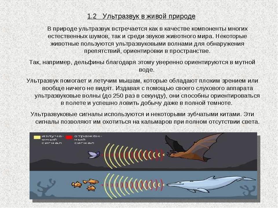 Мобильное приложение довело десятки российских школьников до больницы